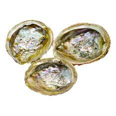 Scoica abalone - suport ardere ierburi parfumate, imagine 2