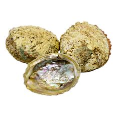 Scoica abalone - suport ardere ierburi parfumate, imagine 3
